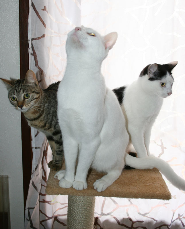 Comme chiens et chats.... Img_1616