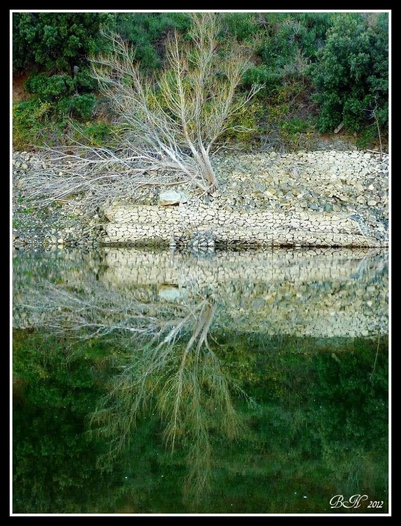 Tel un miroir dans l'eau  P1350710