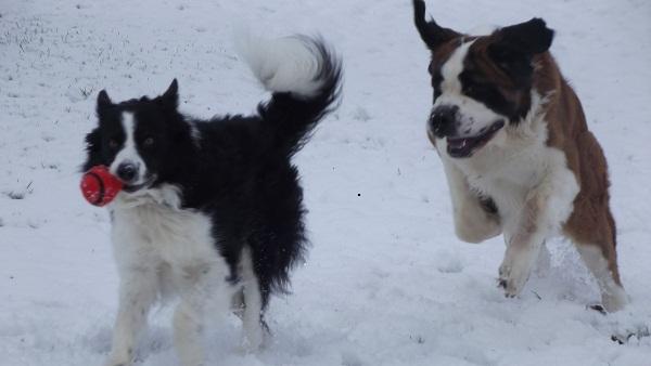 Fun In The Snow 10011