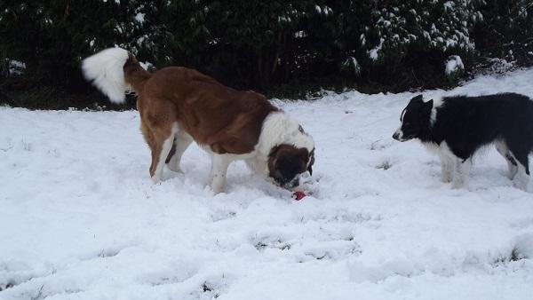 Fun In The Snow 10210