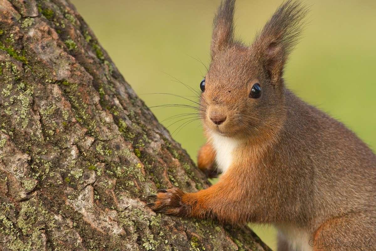 Ritagli di scoiattolo _7d_3510