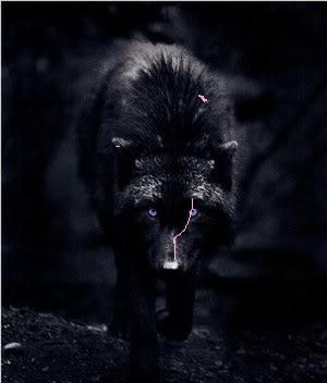 ll Jiu ll The Fierce Wolf_b10
