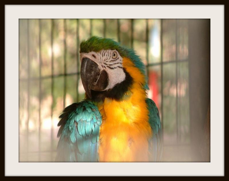 Perroquet Maroquins !!!  Dscf0110