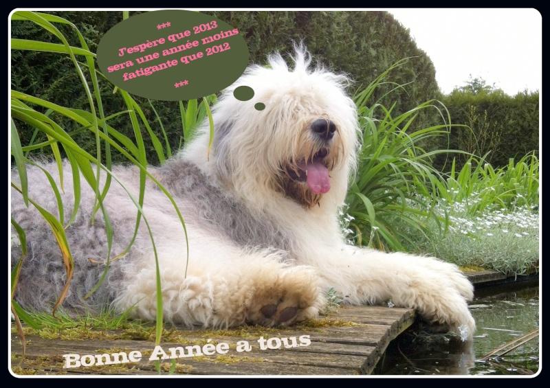 mon chien bobtail Img_0610