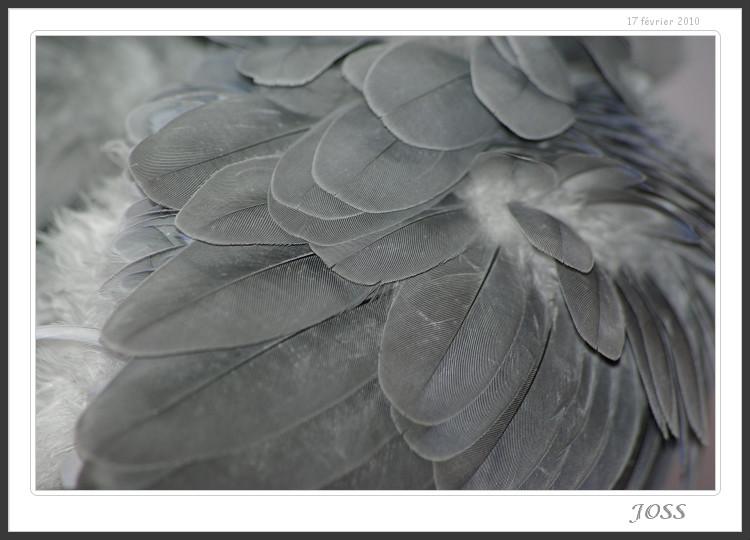 photos de Buk Imgp5012