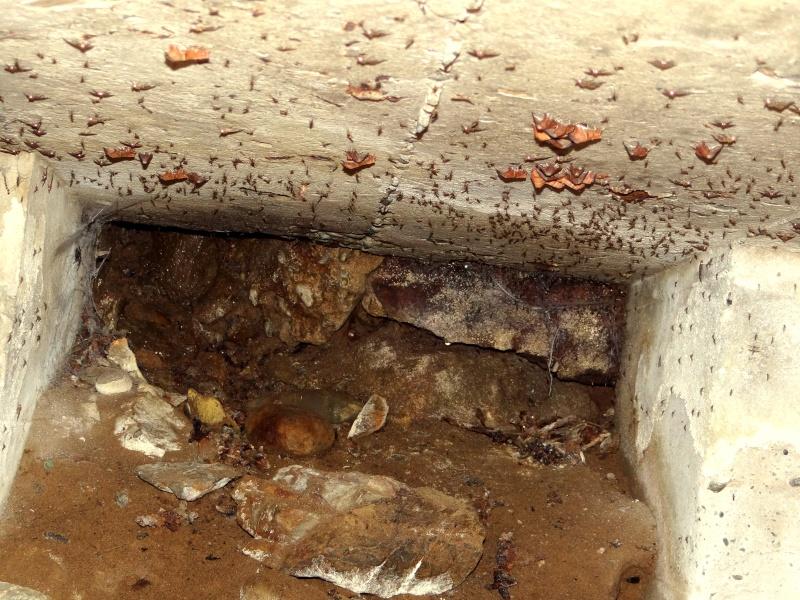 Papillons des bunkers (Prospection d'Hiver) PDF - Page 2 02211