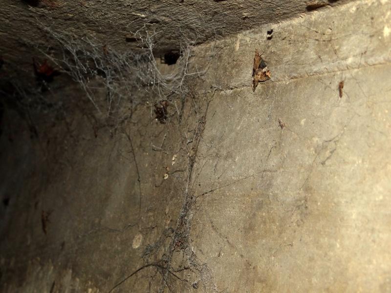 Papillons des bunkers (Prospection d'Hiver) PDF - Page 2 02810
