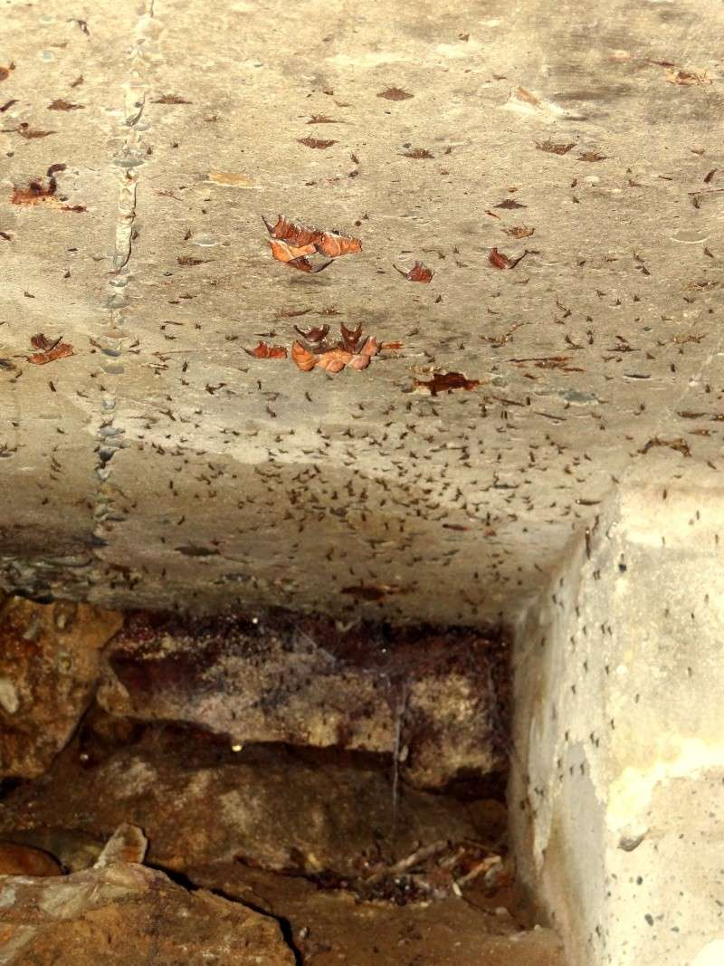 Papillons des bunkers (Prospection d'Hiver) PDF - Page 2 03210