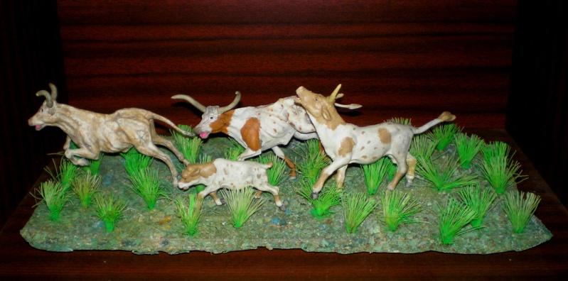 Meine Longhorn-Herde wächst - Seite 2 20130111