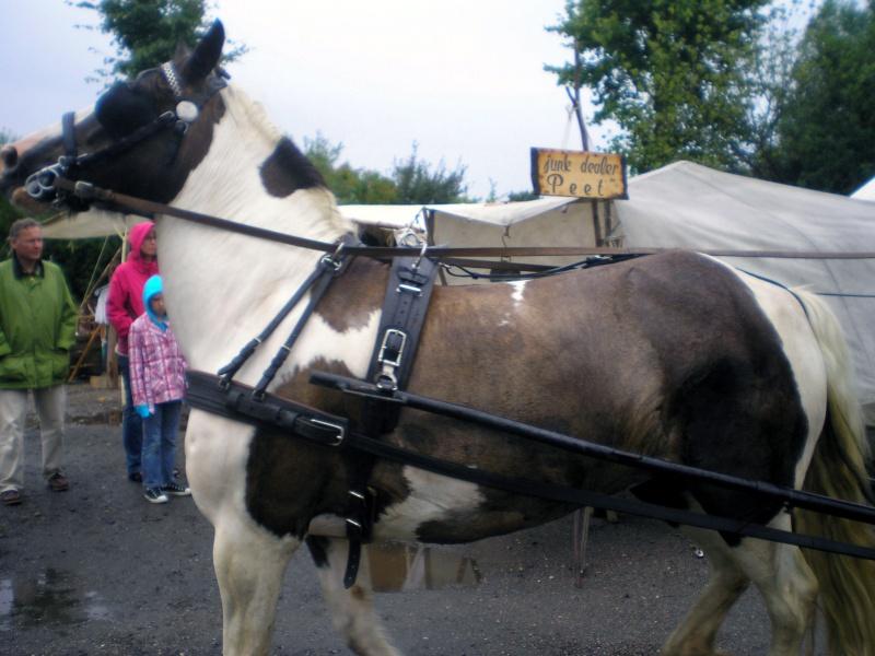 Einachsiger Buggy von Playmobil - Umbau in Variationen Pferde10