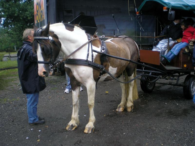 Einachsiger Buggy von Playmobil - Umbau in Variationen Pferde11