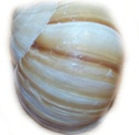 Snail création modèlisation escargot Textur11