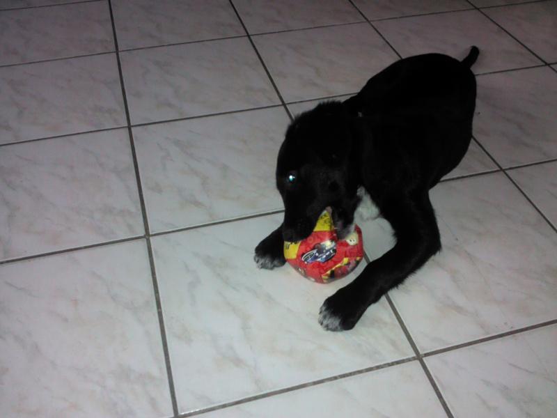 Black Pearl est adoptée ! Img_2010