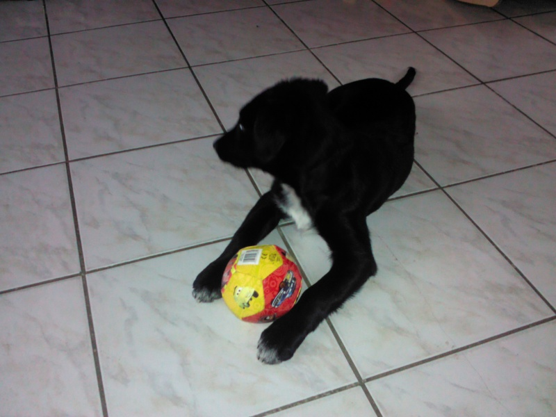 Black Pearl est adoptée ! Img_2011