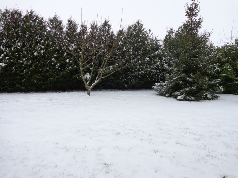la neige est-elle arrivée chez vous ?  - Page 11 Dsc00035