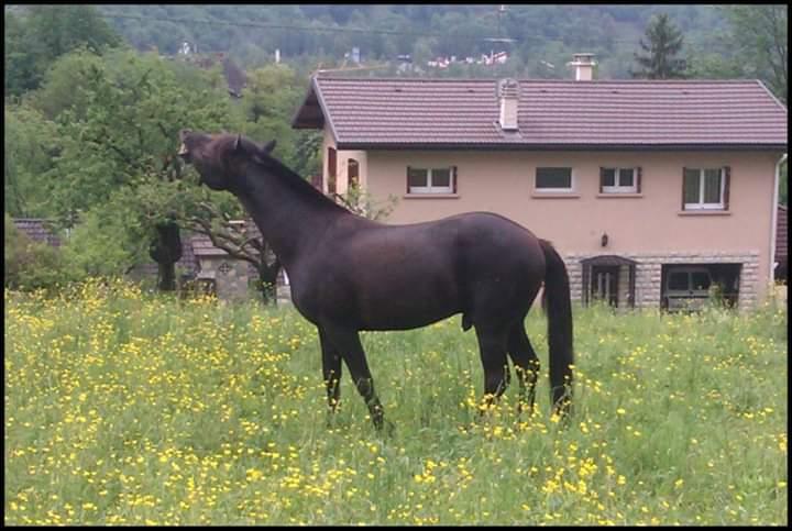 Pension parc combe de Savoie Fb_img11