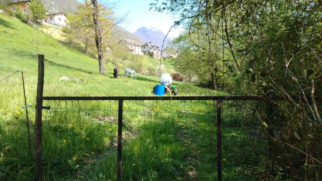 Pension parc combe de Savoie P_201911