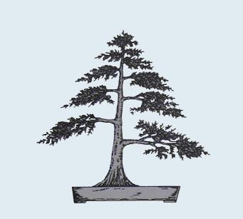 Stili Bonsai (teminologia Jap) Chokka11