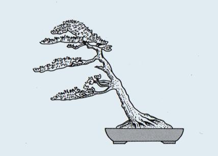 Stili Bonsai (teminologia Jap) Fukina10