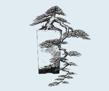 Stili Bonsai (teminologia Jap) Han-ke10