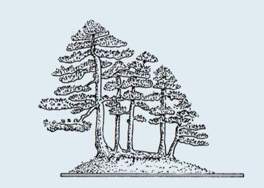 Stili Bonsai (teminologia Jap) Ikada-10