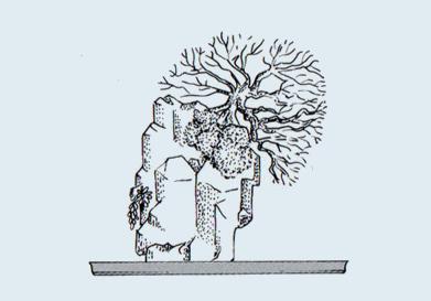 Stili Bonsai (teminologia Jap) Ishits10