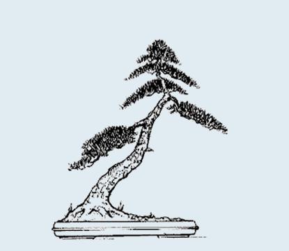 Stili Bonsai (teminologia Jap) Shakan13