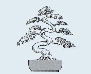 Stili Bonsai (teminologia Jap) Takozu11