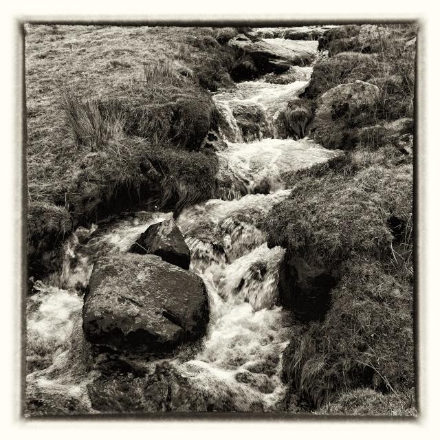 Le Chant du Marais - Page 2 Dsc00719