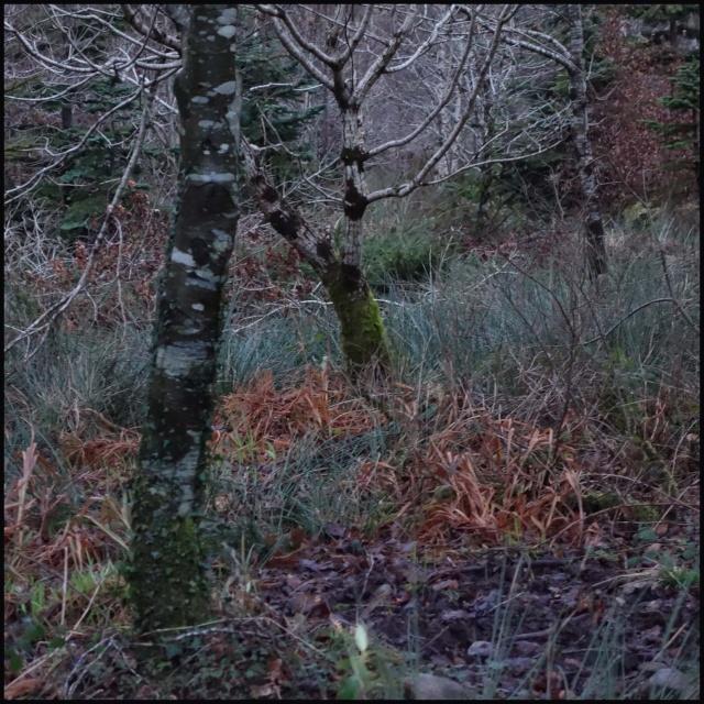 chasse bécasse Irlande et Ecosse - Page 2 Dsc00820