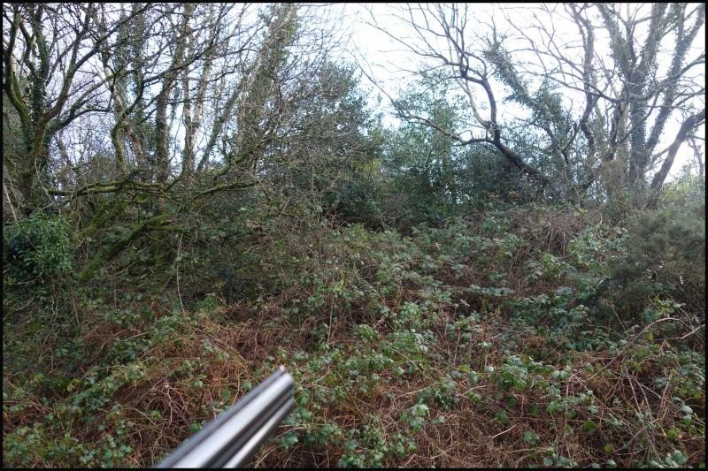 chasse bécasse Irlande et Ecosse - Page 2 Dsc00826