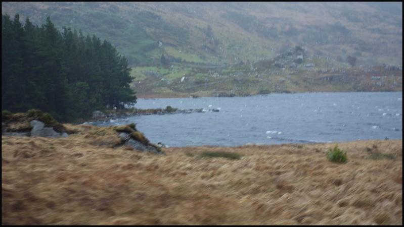 chasse bécasse Irlande et Ecosse - Page 2 Dsc00921