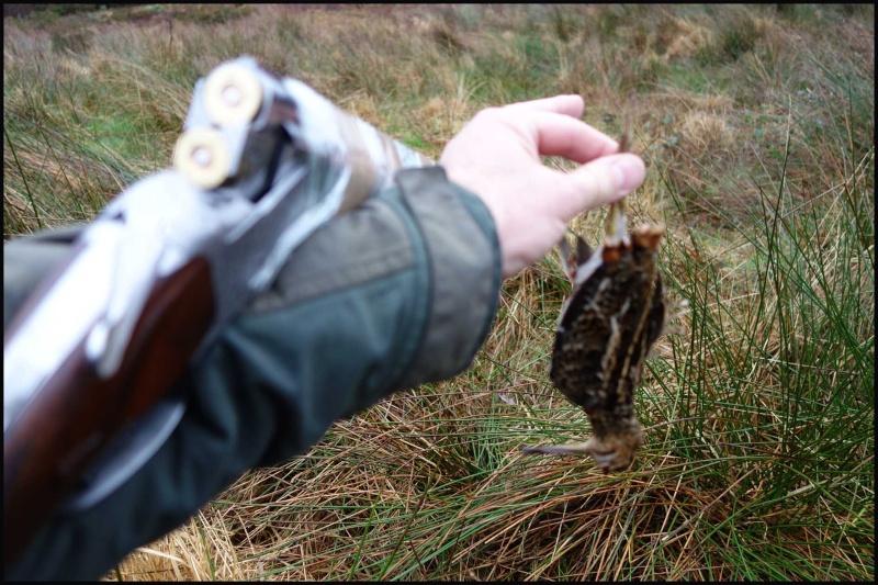 chasse bécasse Irlande et Ecosse - Page 2 Dsc00930