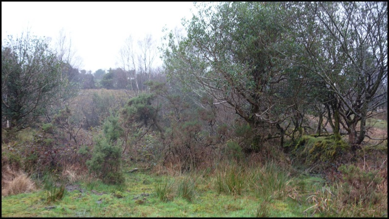 chasse bécasse Irlande et Ecosse - Page 2 Dsc00933