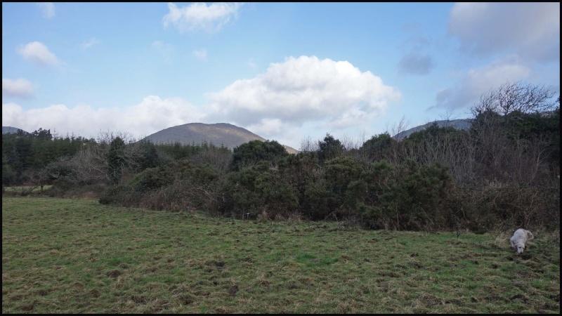chasse bécasse Irlande et Ecosse - Page 2 Dsc00937