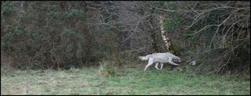 chasse bécasse Irlande et Ecosse - Page 2 Dsc00946