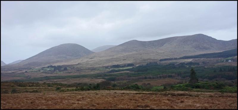 chasse bécasse Irlande et Ecosse - Page 2 Dsc01011
