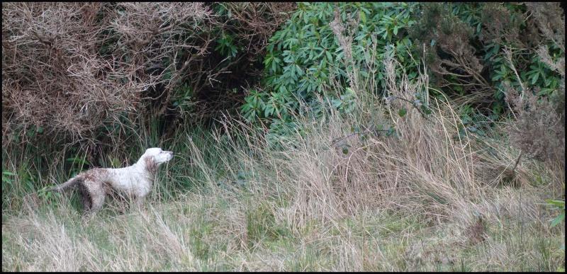 chasse bécasse Irlande et Ecosse - Page 2 Dsc01012