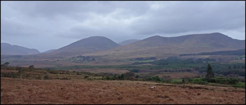 chasse bécasse Irlande et Ecosse - Page 2 Dsc01013