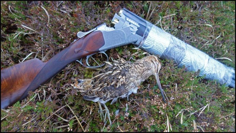 chasse bécasse Irlande et Ecosse - Page 2 Dsc01014