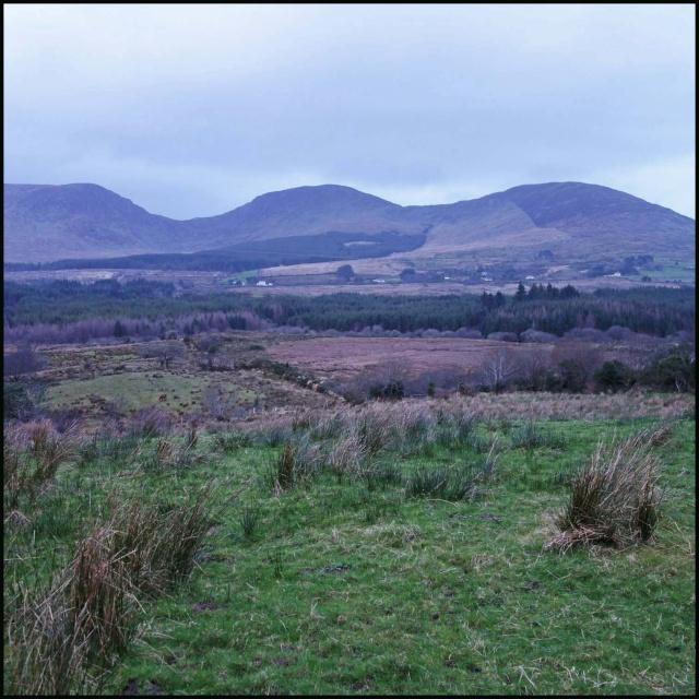 chasse bécasse Irlande et Ecosse - Page 2 Dsc01016