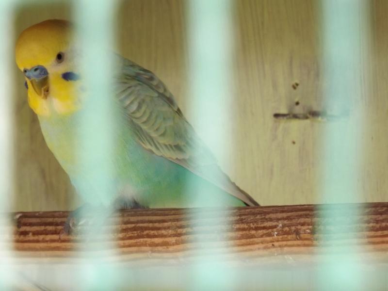 quel petit au nid ? Dscf3012