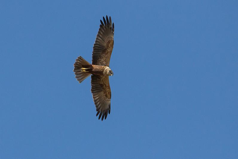Réserve ornithologique du Teich 01_bus10