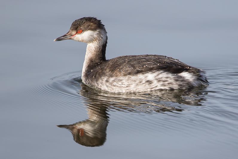 Réserve ornithologique du Teich 01_grz10