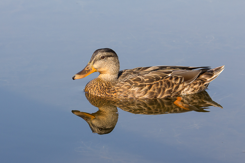 Réserve ornithologique du Teich 04_can10