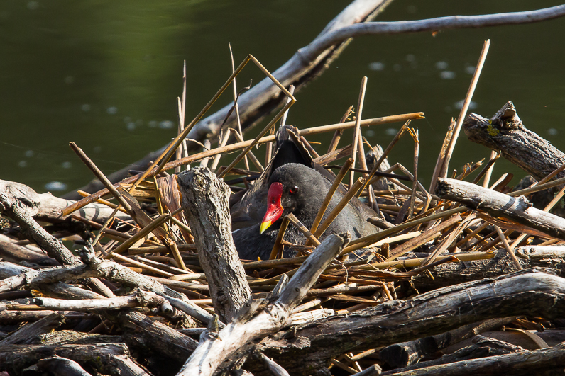 Réserve ornithologique du Teich 07_gal10