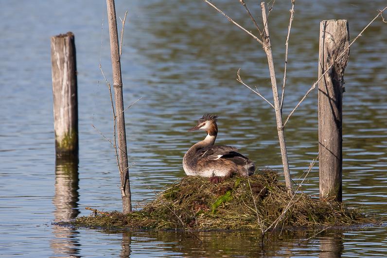 Réserve ornithologique du Teich 07_grz10