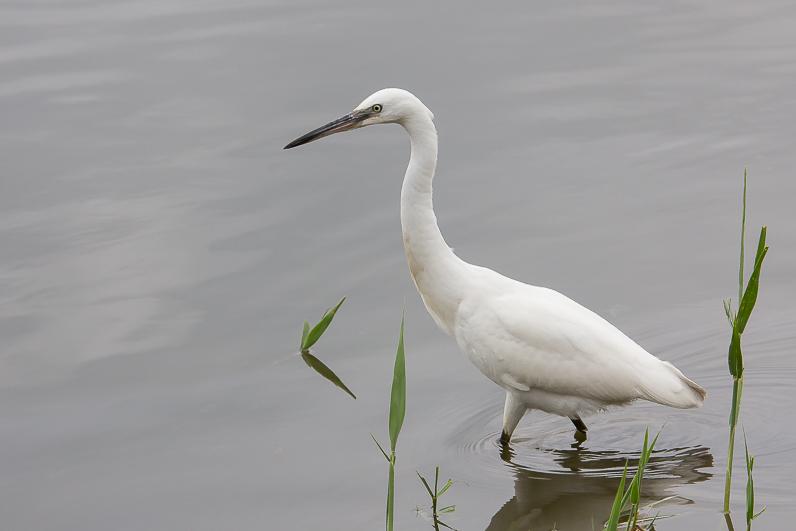 Réserve ornithologique du Teich 09_aig10