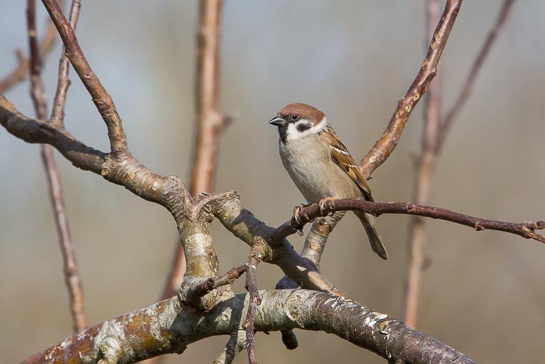 Réserve ornithologique du Teich 09_moi10