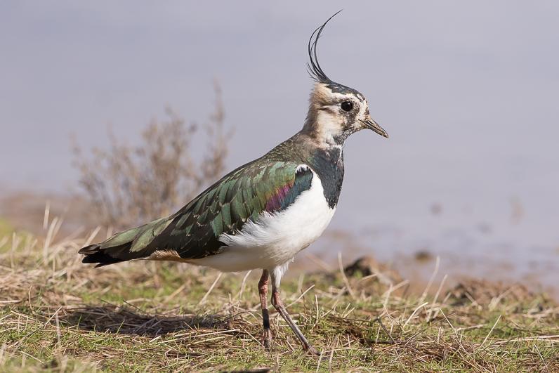 Réserve ornithologique du Teich 09_van10